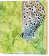 Butterfly Art Prints Wood Print