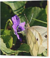 Butterfly At Flower Wood Print