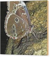 Butterfly At Night Wood Print