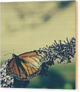 Butterfly At Royal Botanical Gardens Wood Print