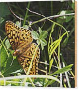 Butterfly At Signal Mountain Wood Print