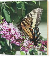 Butterfly At Work Wood Print