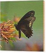 Butterfly Away Wood Print