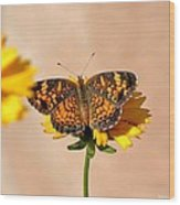Butterfly Baby Wood Print