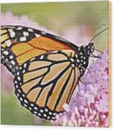 Butterfly Beauty-monarch II  Wood Print