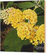 Butterfly Bush Flower Wood Print
