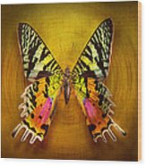 Butterfly - Butterfly Of Happiness  Wood Print by Mike Savad