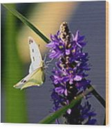 Butterfly - Cabbage White Wood Print