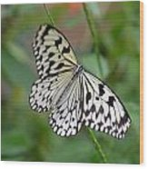 Butterfly Charm Wood Print