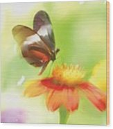 Butterfly Digital Painting Wood Print