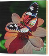Butterfly Dont Fly Away Wood Print