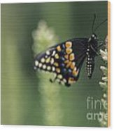 Butterfly E. Black Swallowtail Wood Print