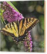Butterfly - Eastern Tiger Swallowtail Wood Print