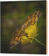 Butterfly Fan Wood Print