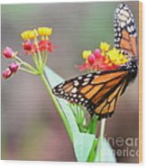 Butterfly Flower - Gossamer Wings Embrace Candy Blossoms Wood Print