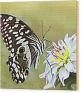 Butterfly Food At Dahlia Flower Wood Print
