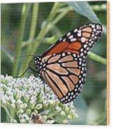 Butterfly Garden - Monarchs 07 Wood Print