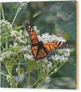 Butterfly Garden - Monarchs 09 Wood Print