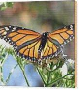 Butterfly Garden - Monarchs 13 Wood Print