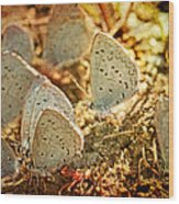 Butterfly Gathering Wood Print