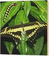 Butterfly Generations Wood Print