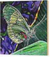 Butterfly Green Wood Print