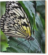 Butterfly - Green Leaf Wood Print