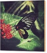 Butterfly Grunge Wood Print