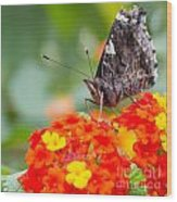 Butterfly Hanging Out On Wildflowers Wood Print