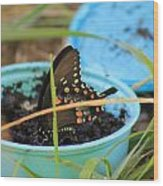 Butterfly In A Cup Wood Print
