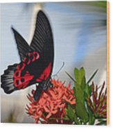 Butterfly In Action Wood Print
