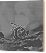 Butterfly In Black And White Wood Print
