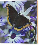 Butterfly In Blue Wood Print by Heidi Smith