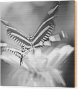 Butterfly In Motion #1961bw Wood Print