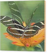 Butterfly In Motion #1967 Wood Print