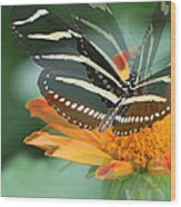 Butterfly In Motion #1968 Wood Print
