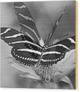 Butterfly In Motion Wood Print