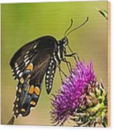 Butterfly In Nature Wood Print