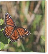 Butterfly In The Everglades Wood Print
