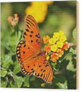 Butterfly In The Glades - Gulf Fritillary Wood Print