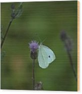 Butterfly In White 2 Wood Print