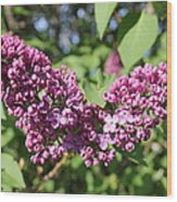 Butterfly Lilac Wood Print