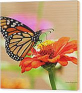Butterfly Lunch Wood Print by Lorna Rogers Photography