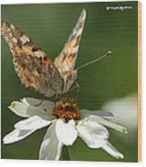 Butterfly Macro Photography Wood Print