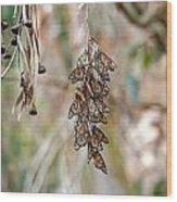 Butterfly Wood Print by Elijah Weber