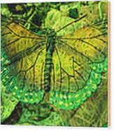 Butterfly Mimetism Wood Print by Jo Ann
