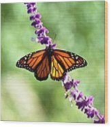Butterfly - Monarch Wood Print