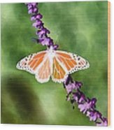 Butterfly - Monarch - Photopower 319 Wood Print