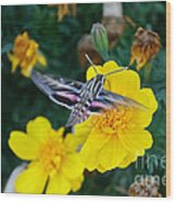 Butterfly Moth Wood Print