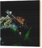 Butterfly Night Wood Print